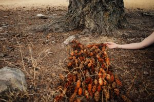 """""""Collecting Seeds"""", photograph by Melanie Gordon"""